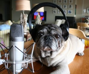 podcasting_Dog